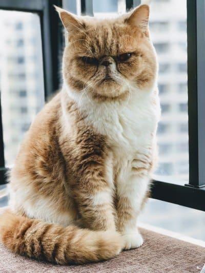 Grumpy Stimmung, wenn Newsletter unübersichtlich und schlecht geschrieben sind
